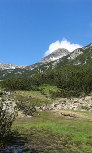 Pirin meadows
