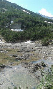 Mud and avalanche debris floating on ice.